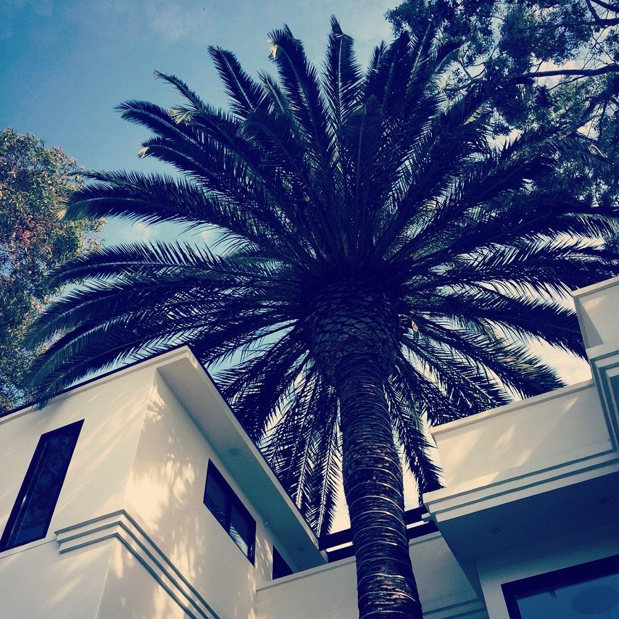 venice_palm_tree